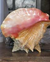 conch_shell.jpg