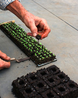 seed-blocks4.jpg