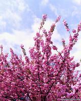 bs_0308_bloom.jpg