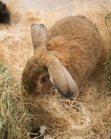 m4126_bunnies4.jpg