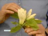 magnolia_trees.jpg