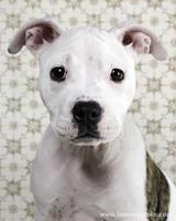 pets_puppies_3.jpg