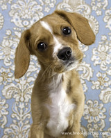 pets_puppies_4.jpg