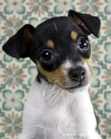 pets_puppies_6.jpg