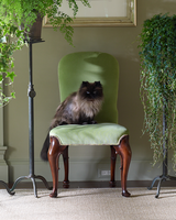 cat sitting on chair