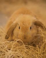 m4126_bunnies22.jpg