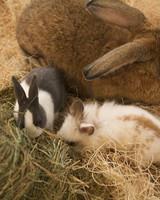 m4126_bunnies27.jpg