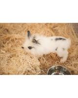 m4126_bunnies29.jpg