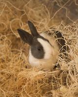 m4126_bunnies41.jpg