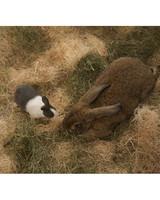 m4126_bunnies54.jpg