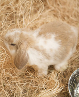 m4126_bunnies58.jpg
