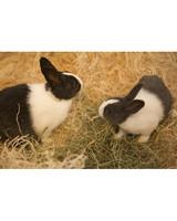 m4126_bunnies84.jpg