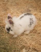m4126_bunnies89.jpg