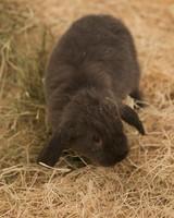m4126_bunnies93.jpg