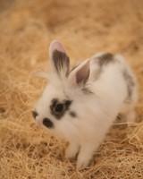 m4126_bunnies99.jpg