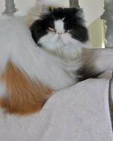 marthas-cats-14.jpg