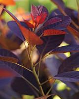 orange-md110341.jpg