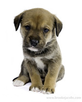 pets_puppies_11.jpg