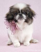 pets_puppies_12.jpg