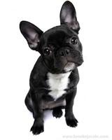pets_puppies_13.jpg