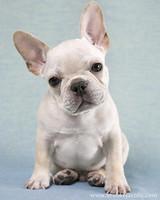 pets_puppies_14.jpg