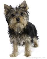pets_puppies_15.jpg