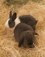 m4126_bunnies106.jpg