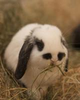 m4126_bunnies112.jpg
