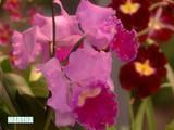 orchid_varieties.jpg
