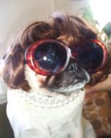 pets_contest_ito.jpg