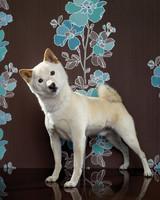 pets_dogs_200103.jpg