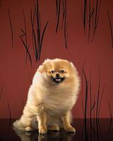 pets_dogs_200224.jpg