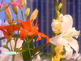 planting_bulbs_1.jpg