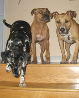 r_pets_kims_dogs.jpg