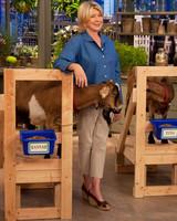 5160_052610_goats.jpg