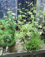6111_030111_herbs.jpg