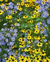 blue and yellow wild flower bunches