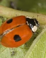 lady bug on green leaf