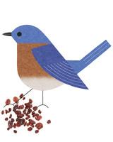 bluebird-mi110385.jpg