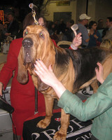 r_0309_bloodhound.jpg