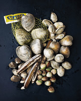 clams-026-md110163.jpg