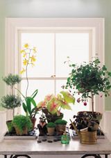 indoor-plants-1016.jpg (skyword:349592)