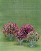 ml305_0503_alliums.jpg