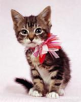 pets_cats_jacobs_1.jpg
