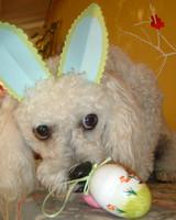pets_contest_79542.jpg