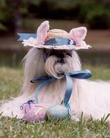pets_contest_82245.jpg