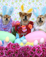pets_contest_82858.jpg