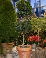 5057_120709_topiary.jpg