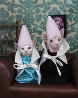 cone-head-cats-1014.jpg