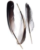 feather-081-d111410.jpg